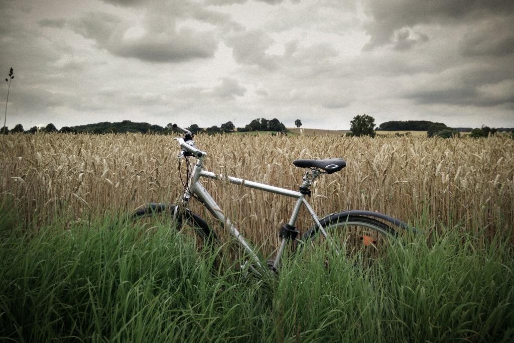 Fahrrad-Feld